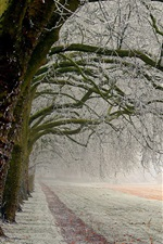 Preview iPhone wallpaper Winter trees, white snow, ice, road, fields