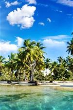 Beautiful scenery, tropics, beach, palm trees, sea, sunlight