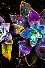 미리보기 iPhone 배경 화면 화려한 꽃, 추상, 물 방울