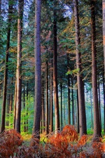 미리보기 iPhone 배경 화면 숲, 나무, 태양, 가을
