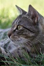 Preview iPhone wallpaper Gray cat, sleep, grass