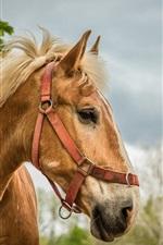 Preview iPhone wallpaper Horse, portrait