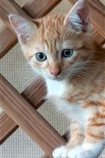 Kitten side view