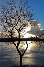 Preview iPhone wallpaper Lake, ice, winter, tree, sunset, dusk