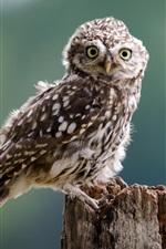 Preview iPhone wallpaper Little owl, bird, eyes, stump