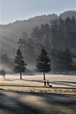 Morning light, park, trees, fog