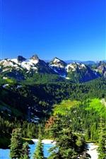 Preview iPhone wallpaper Mount Rainier, USA, spring, trees, mountains, snow