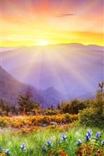 Aperçu iPhone fond d'écranNature paysage, montagnes, arbres, de l'herbe, des fleurs, le lever du soleil
