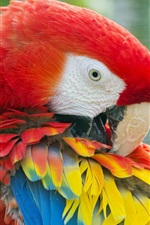 Preview iPhone wallpaper Parrot, Macaw, colorful feathers