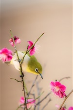 Preview iPhone wallpaper Peach blossom, pink flowers, bird, spring