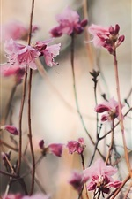 Preview iPhone wallpaper Peach blossom, pink flowers, spring, twigs