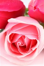 Preview iPhone wallpaper Pink and red rose flowers