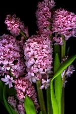 Preview iPhone wallpaper Pink flowers, petals, stem