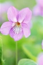 Preview iPhone wallpaper Purple flowers, spring, green bokeh