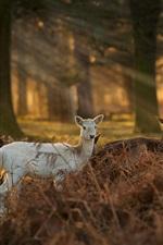 Preview iPhone wallpaper Sunlight, deer, forest