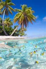 Preview iPhone wallpaper Tropical scenery, sea, beach, palm trees, fish, sharks