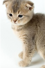 Preview iPhone wallpaper Two kittens, cute pet