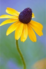 Preview iPhone wallpaper Yellow flowers, rudbeckia