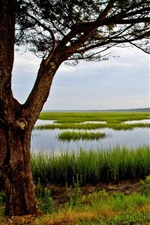 Preview iPhone wallpaper Amelia Island, Florida, USA, tree, grass, swamp