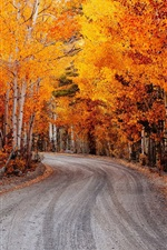 Birch, red leaves, autumn, road