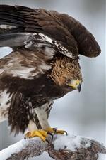 Pássaro, águia, inverno, galhos