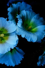 Preview iPhone wallpaper Blue flowers, petals, mallow, black background