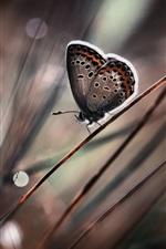 Preview iPhone wallpaper Butterfly close-up, grass, bokeh