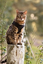 Preview iPhone wallpaper Cat sit on stump
