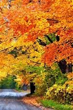 Preview iPhone wallpaper Colorful autumn, road, trees, park