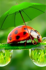 Preview iPhone wallpaper Creative pictures, water droplets, dew, ladybugs, umbrellas
