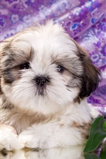 Preview iPhone wallpaper Cute puppy, tulip flowers