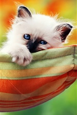 Preview iPhone wallpaper Cute white kitty, blue eyes, hammock