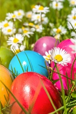 Easter, colorful eggs, flowers, daisies