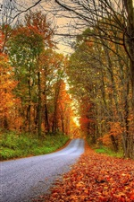 Preview iPhone wallpaper Forest, trees, leaves, colorful, road, autumn