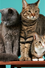 Preview iPhone wallpaper Four cats, desk, green background
