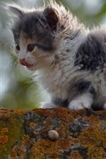 Preview iPhone wallpaper Furry cat, kitten
