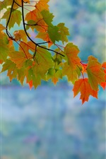 Preview iPhone wallpaper Maple leaves, branch, autumn, red, green, bokeh