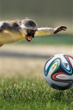 Preview iPhone wallpaper Monkey play football