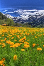 Mountains, flowers, clouds