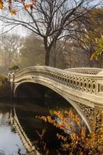 Park, bridge, trees, autumn