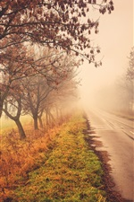 Preview iPhone wallpaper Road, trees, nature scenery, autumn, fog
