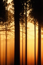 Preview iPhone wallpaper Sunset forest trees, black shadow, warm orange