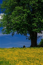 Preview iPhone wallpaper Tree, meadow, summer, blue sky, clouds
