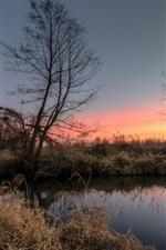Árvores, lago, juncos, manhã, alvorada