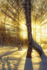 Preview iPhone wallpaper Winter, snow, trees, sunset, sun rays