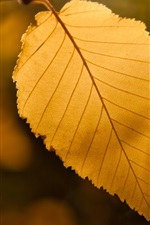 Preview iPhone wallpaper Yellow leaf, bokeh, fall