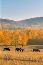 Preview iPhone wallpaper Autumn, horses, trees, grass, yellow, hill