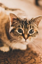 Preview iPhone wallpaper Cat, eyes, house