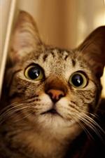 Cat, peeps