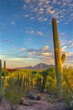 Preview iPhone wallpaper Desert, cactus, sky, clouds, sunset, mountain